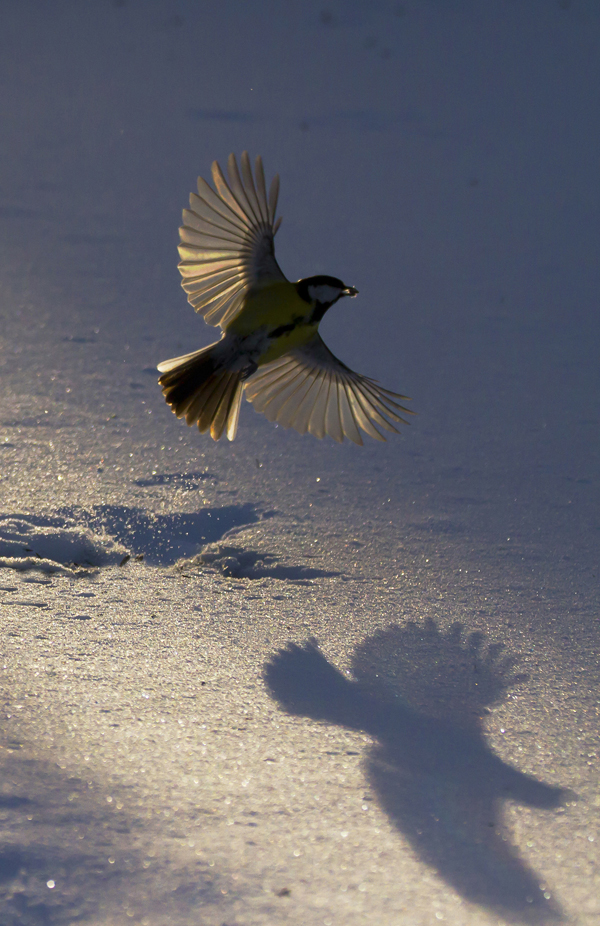 Lyser i vare fuglevinger